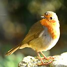 """ December Robin "" by Richard Couchman"