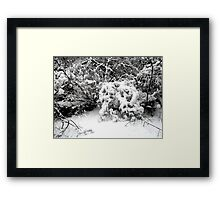 SNOW SCENE 1 Framed Print