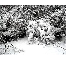 SNOW SCENE 1 Photographic Print