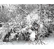 SNOW SCENE 4 Photographic Print