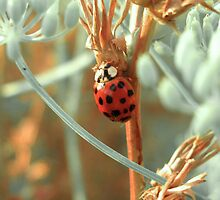 LadyBug and Fennel by jalexanderart
