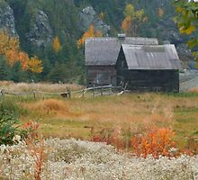 OLD BARNS by Madeline M  Allen