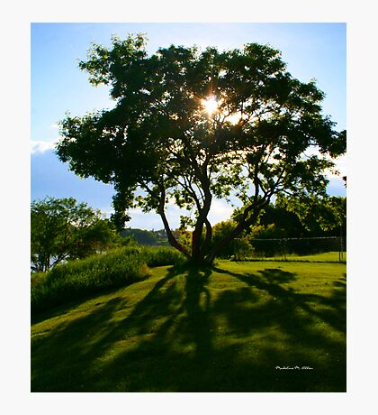 The Family Tree Photographic Print