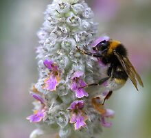 Bumble Bee by Neil Bygrave (NATURELENS)