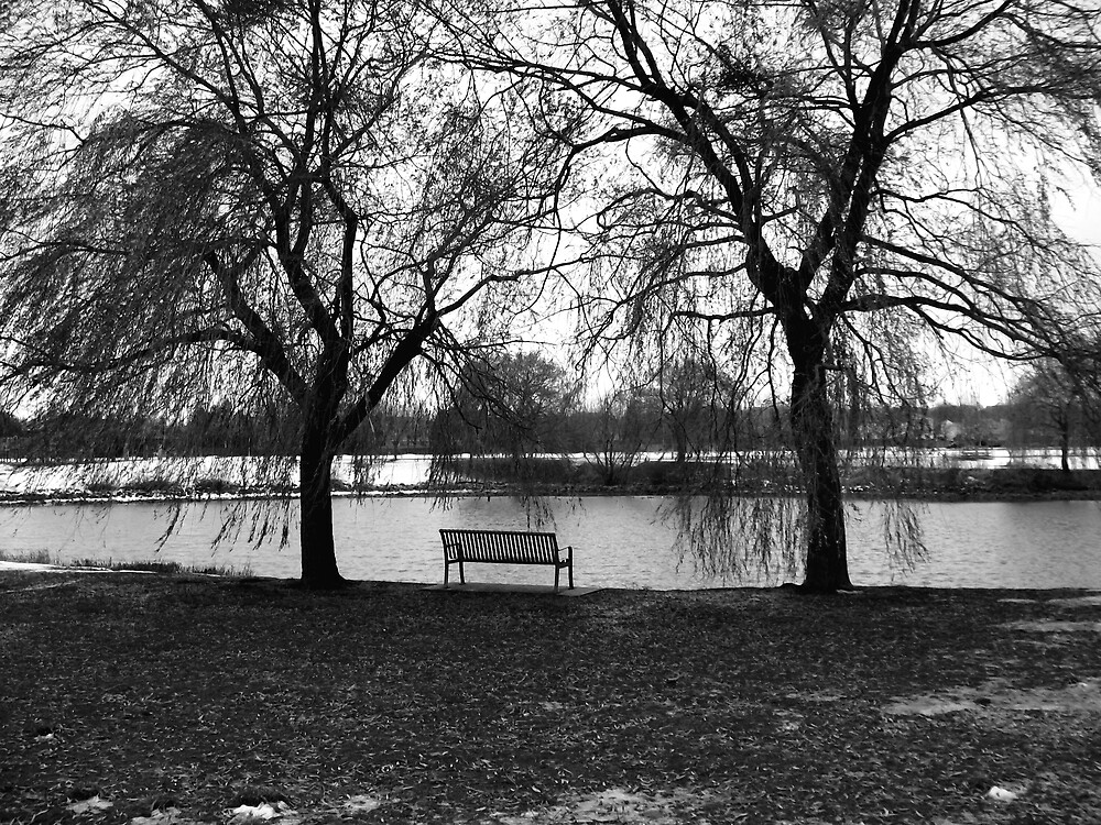 Between the Willows by nikspix