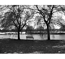 Between the Willows Photographic Print