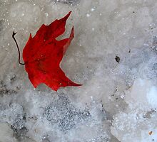 Frozen Leaf by nikspix