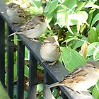 Central Park Birds by Leonard Owen