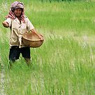 Rice Paddy by 945ontwerp