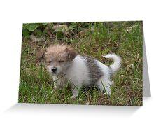 Small sleepy dog Greeting Card