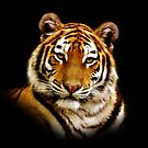 Tiger by PhotoDream Art