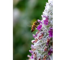 A Bee's Life Photographic Print