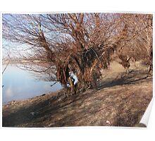 Bearen willow Poster