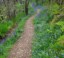 Along the Bluebell Path by Heidi Stewart