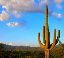 Saguaro View by Lori Botelho