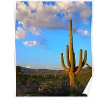 Saguaro View Poster