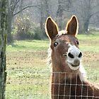 Howdy! by Nichole Schoff