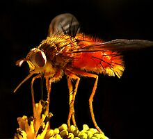 Red Fly by Ken  Aitchison