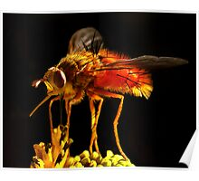 Red Fly Poster