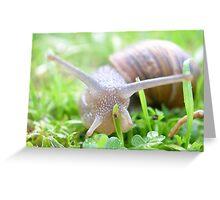 tiny creatures Greeting Card
