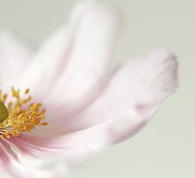 Japanese Anemone. by Alyson Fennell
