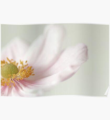 Japanese Anemone. Poster