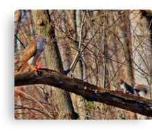 Red-Tail Hawk has a Visitor Canvas Print