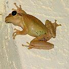 Froggy One by Ferguson