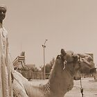 Camel herder by NicoleBPhotos