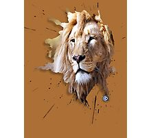 lions big cats Photographic Print