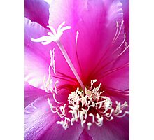 Pink Orchid Cactus Photographic Print