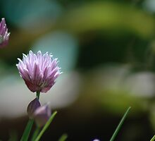 Chive by Mindmonkey