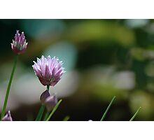 Chive Photographic Print