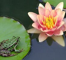 frog on a lilly pad by samantha jefferson