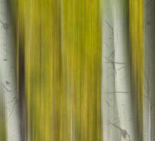 Autumn Aspen Tree Trunks In Their Glory Dreaming Sticker