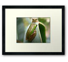 frogs Framed Print