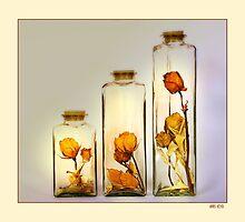 dry roses by hans eder