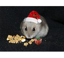 Oreo Ready for Santa Photographic Print