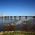 Mississippi River Bridge by Patricia Betts