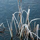 Winter Grass by PRboy