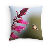Humming Bird Hawk Moth Throw Pillow