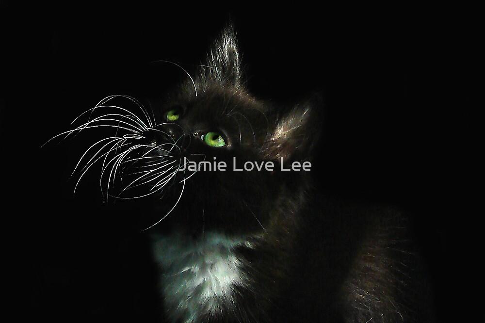 Miss Whiskas by Jamie Lee