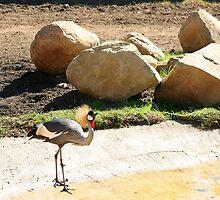 East African Crowned Crane by Henrik Lehnerer