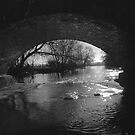 River Thames at Wolvercote 2 by Colin Walker
