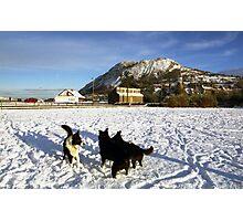 Snow pals Photographic Print