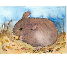 Mouse pen and ink Illustration Photographic Print