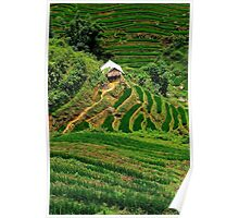 A House in the Rice Fields - Sa Pa, Vietnam. Poster