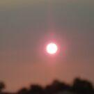 Pink Sun Set by Cactus