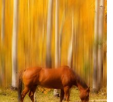 Mystic Horses  by Bo Insogna