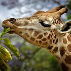 Giraffe by SD Smart